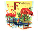 Flamingo, Art Print