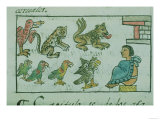 Animals of the Aztec Emperor, from an Account of Aztec Life in Central Mexico, Giclee Print