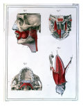"Anatomy of the Throat and Jaw, from ""Manuel D'Anatomie Descriptive Du Corps Humain"", Giclee Print"