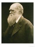 Portrait of Charles Darwin, Giclee Print
