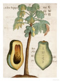 Papaya Tree Art Print, Michel Boym
