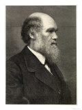 Charles Darwin, Giclee Print