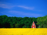 Rape Field, Red House and Forest, Kullaberg Skane, Kullaberg, Skane, Sweden, Photographic Print