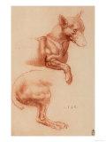 Study of a Pomeranian Dog, Giclee Print, Leonardo da Vinci
