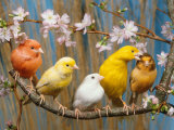 Canaries, Art Print