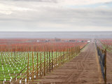 View Over Vineyard, Bodega Del Fin Del Mundo, the End of the World, Neuquen, Patagonia, Argentina, Giclee Print