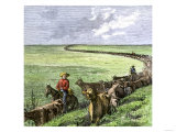 Cowboys Driving a Cattle Herd from Texas to Kansas on the Chilsholm Trail 1870, Giclee Print