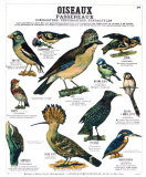 Song Bird Teaching Chart, Art Print
