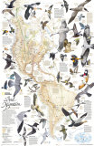 Bird Migration Map, Western Hemisphere, Art Print