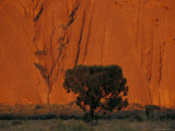 The Silhouette of a Desert Oak against Rusted Sandstone Waves of Uluru, Australia, Photographic Print