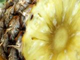 Pineapple, Photographic Print