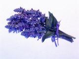 Bouquet of Lavender, Photographic Print