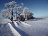 Winter Landscape Near Odense, the Birthplace of Hans Christian Andersen, Photographic Print