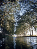 Elm Trees Line Languedoe Canal, Trebes, Southern France East of Toulouse