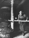 Man Using Old Wine Press at Vaux En Beauiplais Vineyard, Photographic Print