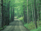 Gravel Road Through Maple Grove, Green Mountains, Vermont, USA, Photographic Print