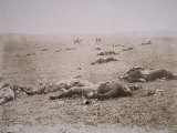 Dead on the Field of Gettysburg, July 1863, Photographic Print