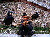 Fisherman with His Fishing Cormorants, Guangzhou, China, Photographic Print