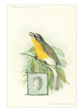Yellow-Breasted Chat, Art Print
