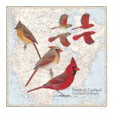 Cardinal, Art Print