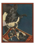Nature Magazine - View of a Boston Terrier TearingUp a Nature Magazine with its Picture, c.1931 Art Print
