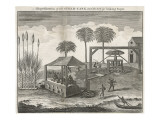 A Representation of the Sugar-Cane and the Art of Making Sugar.',  Giclee Print