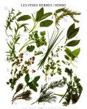 Mixed Herbs Art Print