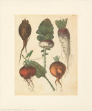 Turnips and Roots Art Print