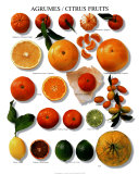 Citrus Fruits Art Poster
