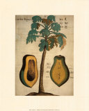 Papaya Tree Art Print, Michel Boym