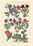 Violets, Giclee Print