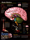 Brain Matters posters