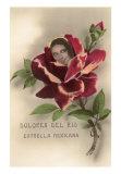 Dolores Del Rio, Mexican Star, Art Print