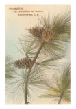 Pine Needles and Cones, Southern Pines, North Carolina Art Print