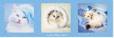 Simply Blue-Tiful Stretched Canvas Print