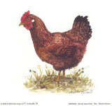 Rhode Island Red Hen, Art Print