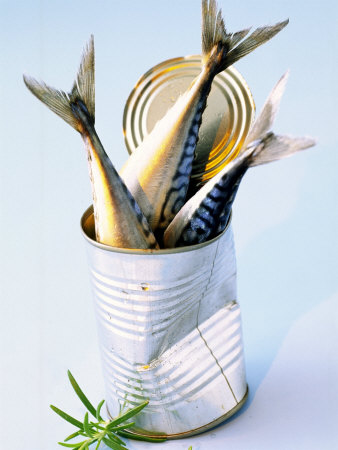 Three Fish (Mackerel) in a Tin Photographic Print