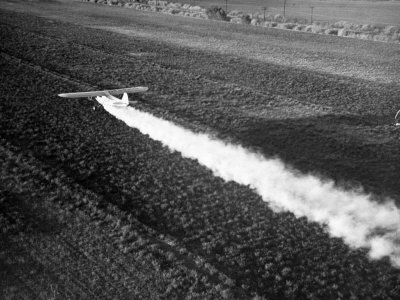 Plane Spraying Alfalfa Fields in Imperial Valley with Ddt Photographic Print by Loomis Dean