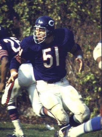 Football: Chicago Bears Dick Butkus No.51 in Action Vs Detroit Lions Metal Print