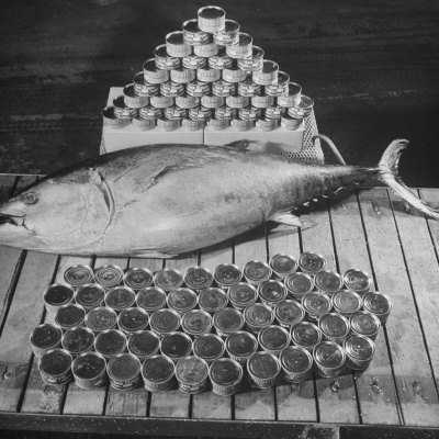 Tuna and Cans of Tuna Photographic Print by Allan Grant