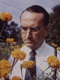 Flowers: Marigold and David Burpee Premium Photographic Print by Eric Schaal