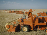 Harvest Story: Combines Harvest Wheat at Ranch in Texas Premium Photographic Print by Ralph Crane