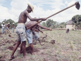 Haitian Men Using Long Hoes Working in Field Premium Photographic Print by Lynn Pelham