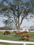 Calumet, Horse Farm Photographic Print by Eliot Elisofon