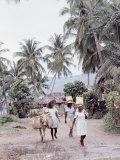 Group of Haitian Woman and a Donkey Walking Down a Dirt Road Premium Photographic Print by Lynn Pelham