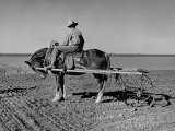 Horse Assisting the Farmer in Plowing the Field Photographic Print by Carl Mydans