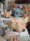 East German Butcher Shop, Displaying Whole Pigs Heads Photographic Print by Ralph Crane