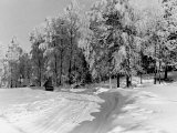 Snow Covering Countryside Near Lake Ladoga Premium Photographic Print by Carl Mydans