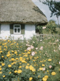 Russian Look of the Land Essay: Marygolds in the Garden of a Farm Premium Photographic Print by Howard Sochurek