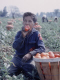 Boy Wearing an Old Scout Shirt, Eating Tomato During Harvest on Farm, Monroe, Michigan Premium Photographic Print by John Loengard